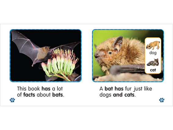 inner spread: Bat Facts